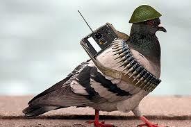 Стратегия взаимодействия голубь