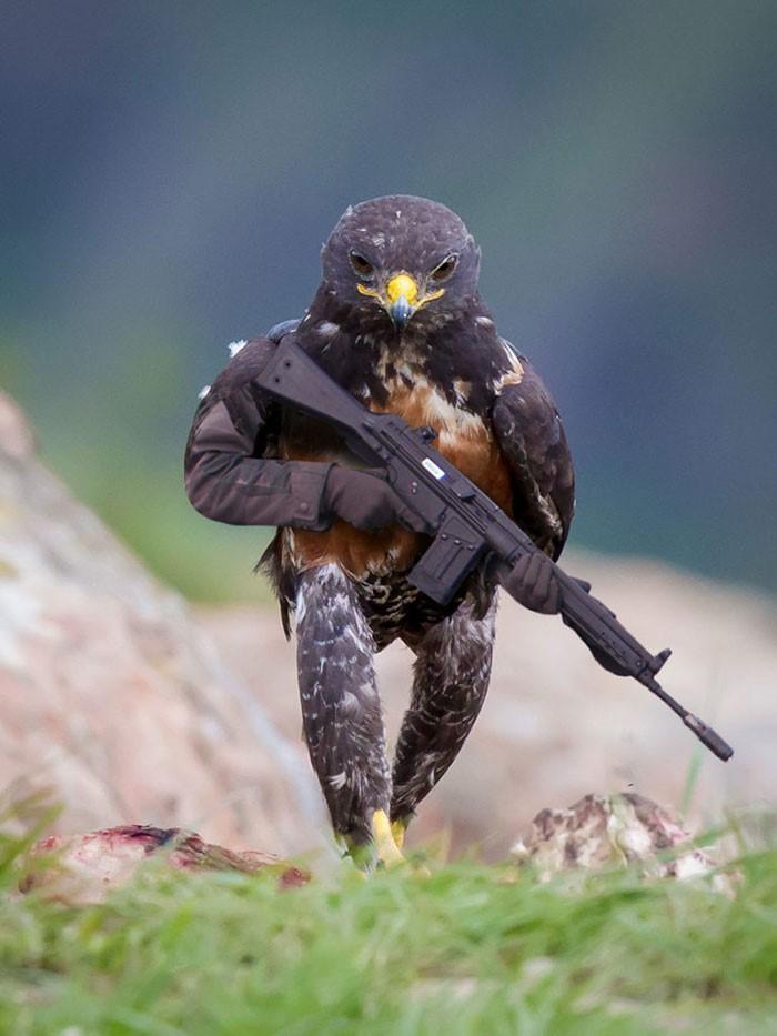 Стратегия_взаимодействия голубь